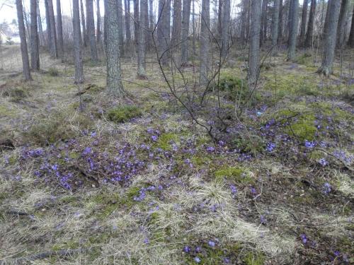 Flowers in bloom on our way to Storsjöbadet